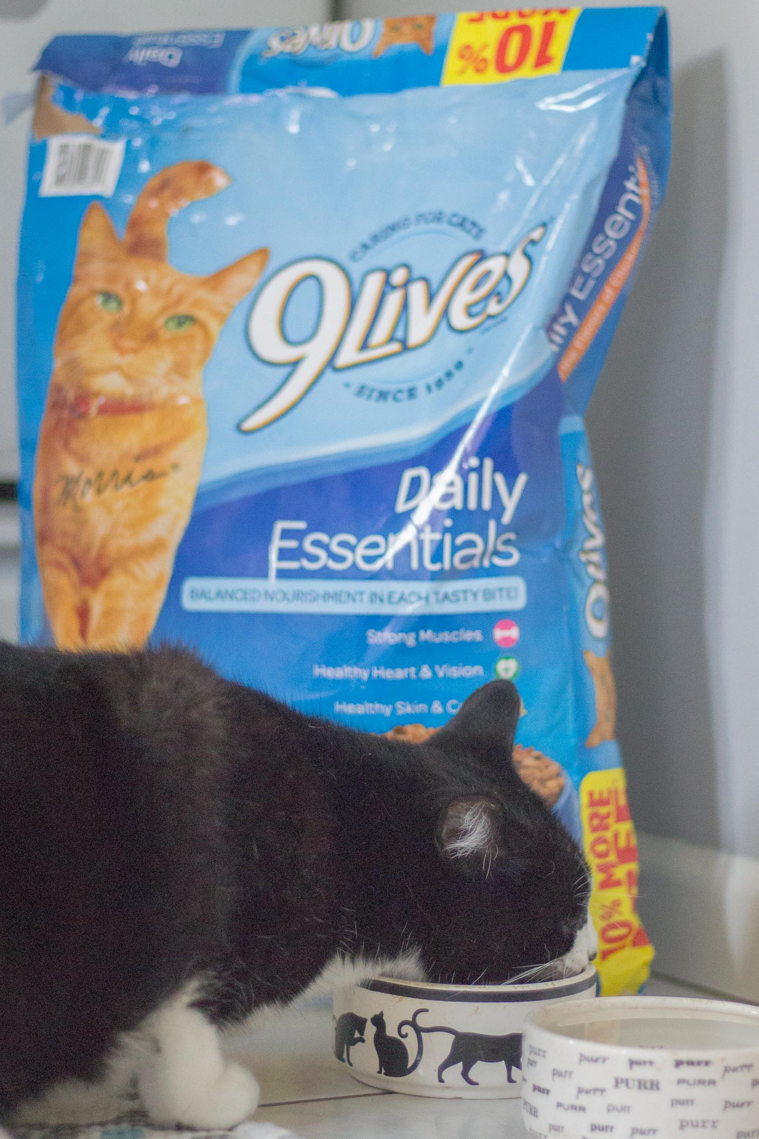 cat-care-tips.jpg