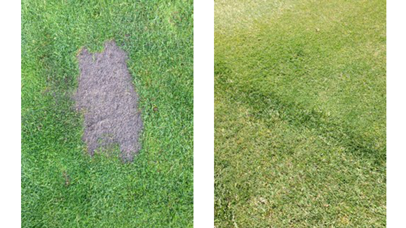 Mindful divot practice and sand repair on left, and healing results on right.