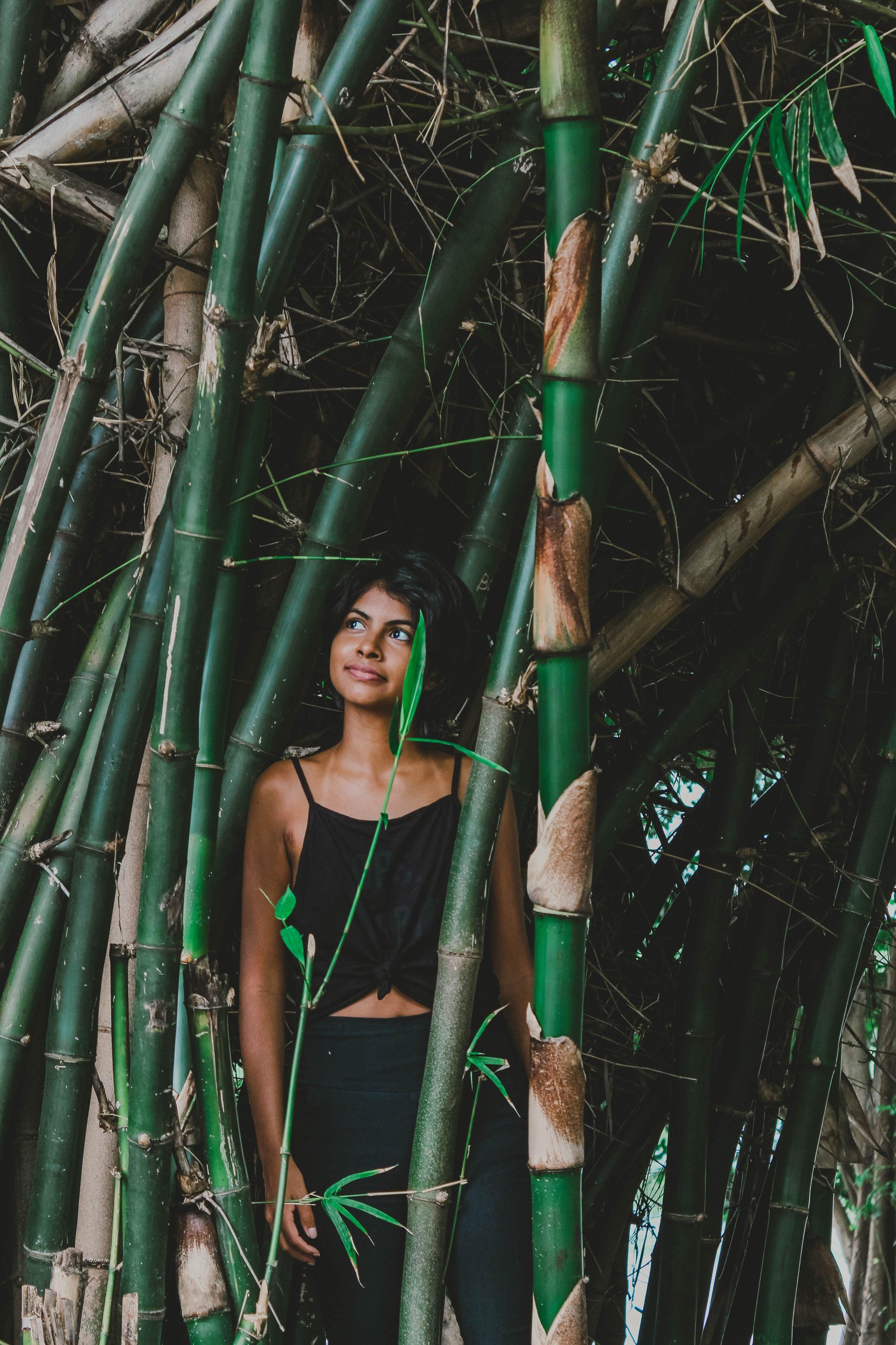 bamboo-beautiful-beauty-1934831.jpg