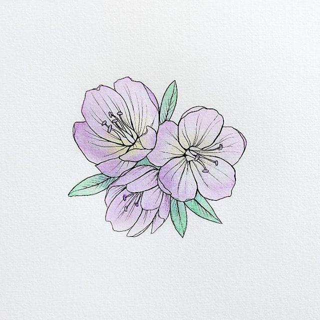 Created this illustration at work @reedcreative, where we are making it a point to create monthly illustrations! This wildflower is a Smooth-Leaf Douglasia. You can find them blooming soon at Mitchell Point, McCord Creek Falls in the beautiful Columbia Gorge 😊🌸