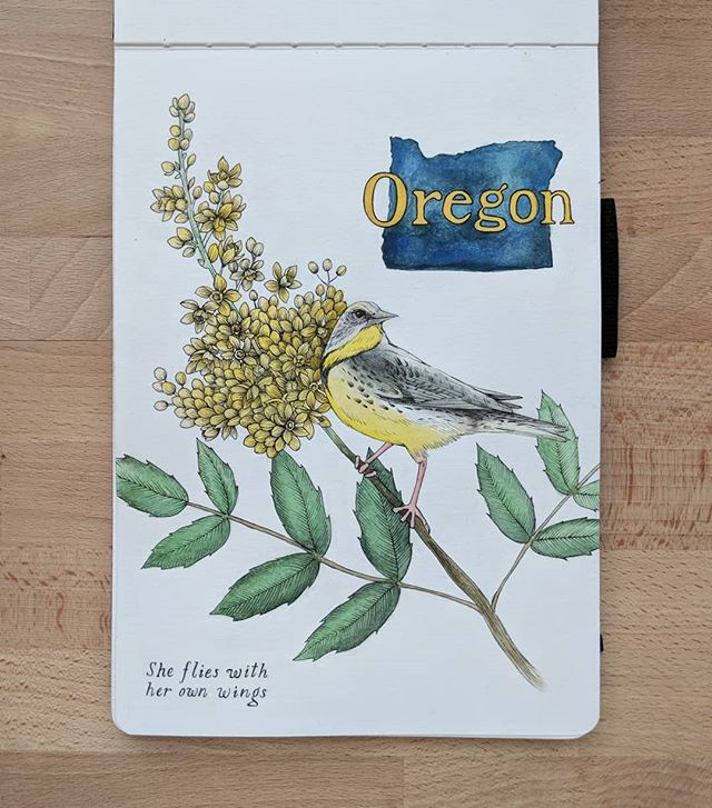 """Starting a new series ✨ Kicking it off with Oregon 💚  OREGON State Bird: Western Meadowlark State Flower: Oregon Grape Motto: """"She flies with her own wings"""" .  #illustration #watercolor #oregon #meadowlark #oregongrape #ink #botanical #botanicalillustration #floral #floralillustration #statebird #birding #stateflower #portland #pdx #makersgonnamake #instaart"""