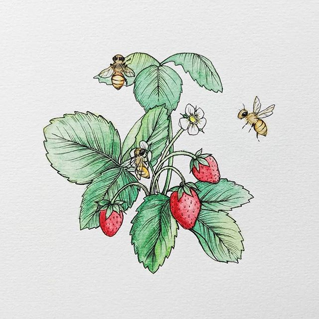 Another little spot illustration I made last month at Reed Creative 🍓🐝 This guys was inspired by an article I read about how Morgan Freeman turned his huge property into a honeybee sanctuary. #savethebees #conservation #inspiring  #watercolor #illustration #ink #botanical #smallbusiness #open #storefront #sign #type #lettering #typography #makersgonnamake #instaart