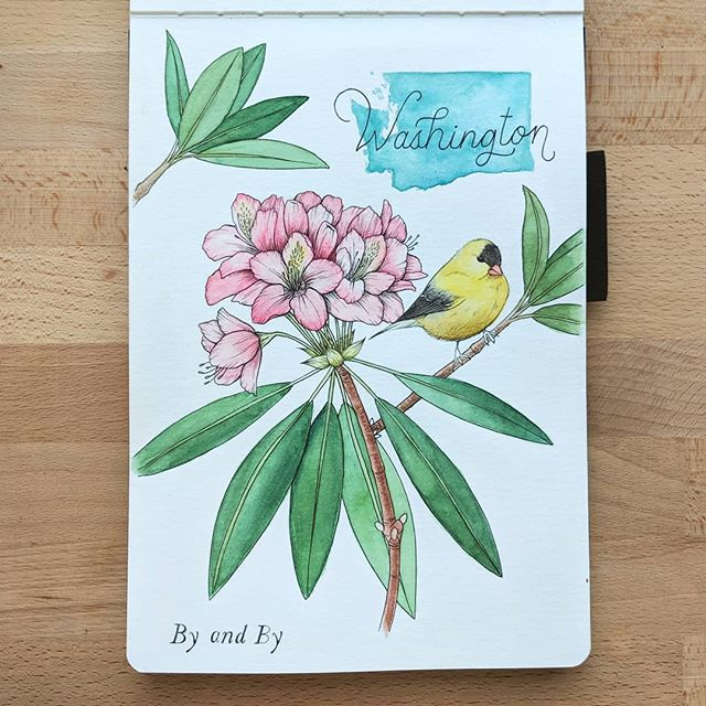 """WASHINGTON I have a special place in my heart for Washington. I have worked over the river in Washington for almost 3 years, and I have been lucky enough to meet some amazing people :) State Bird: American Gold Finch State Flower: Pacific Rhododendron Motto: """"By and By""""  #illustration #watercolor #washington #goldfinch #rhododendron #byandby#ink #botanical #botanicalillustration #floral #floralillustration #statebird #birding #americangoldfinch #pacificrhododendron #stateflower #portland #pdx #makersgonnamake #instaart"""