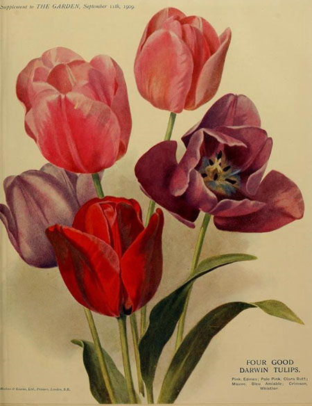 1909, the first year  the garden  used colour images
