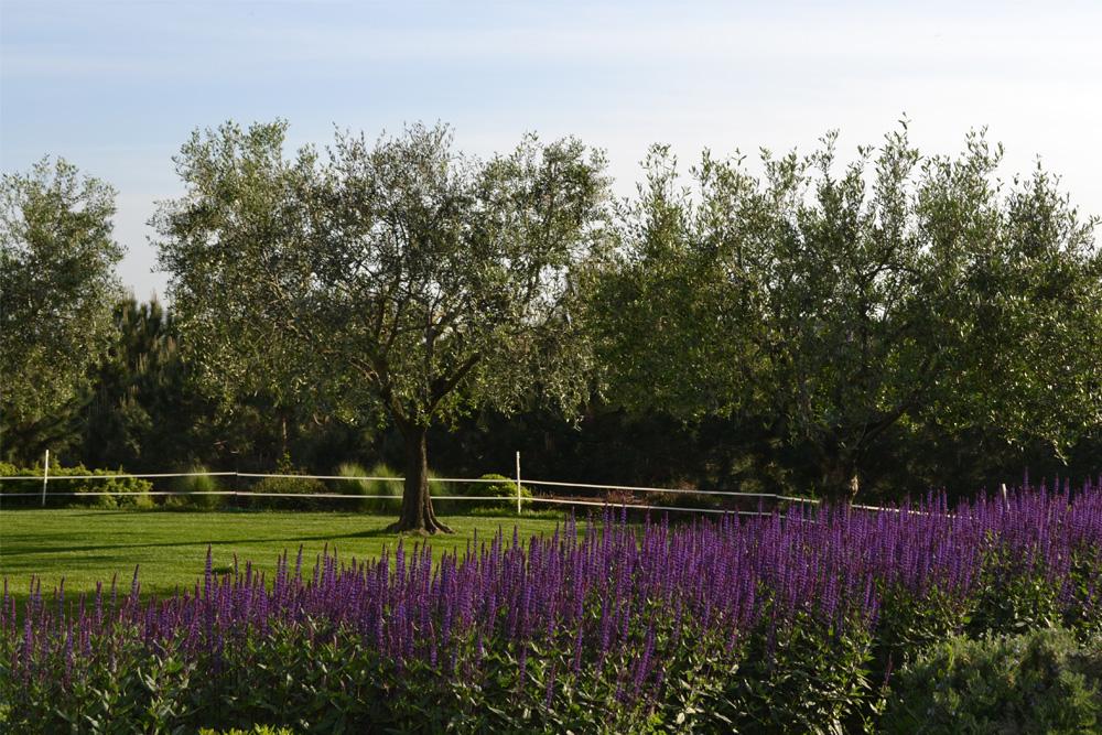 08-Parco-privato-Roma-Studio-Architetto-del-paesaggio-Green-Atelier-Roma.jpg