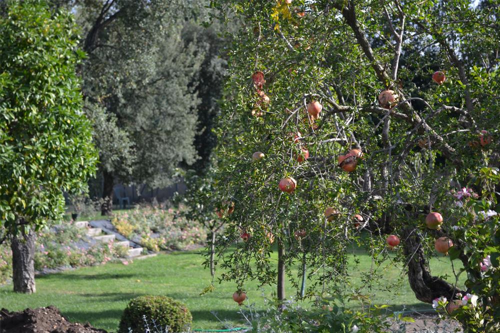11-Parco-privato-Roma-Studio-Architetto-del-paesaggio-Green-Atelier-Roma.jpg