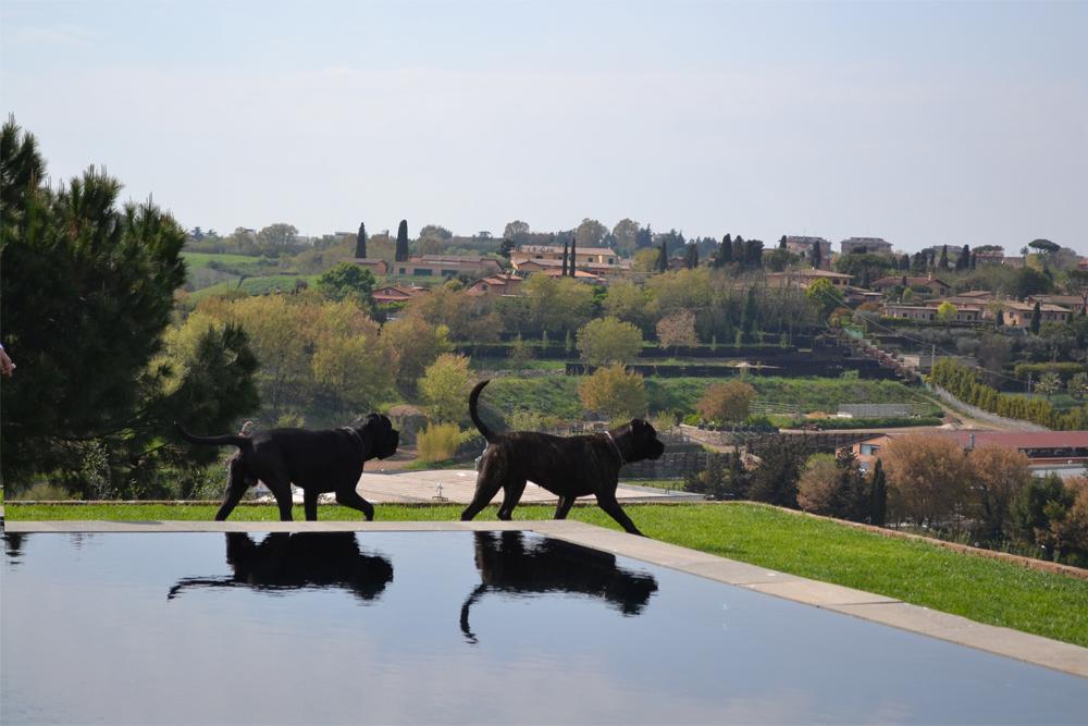 13-Parco-privato-Roma-Studio-Architetto-del-paesaggio-Green-Atelier-Roma.jpg