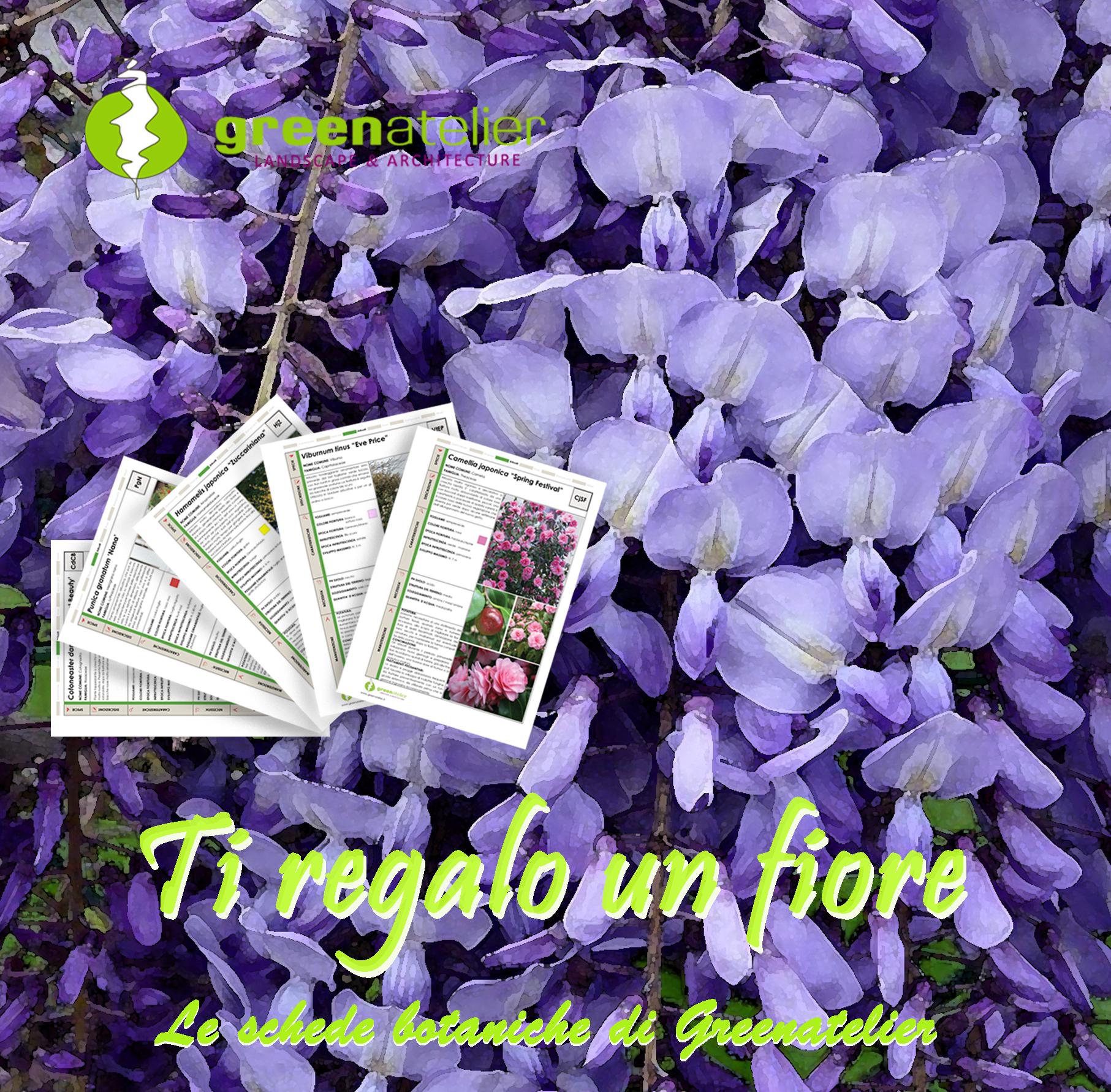 TI REGALO UN FIORE - INSTAGRAM wisteria (1).png