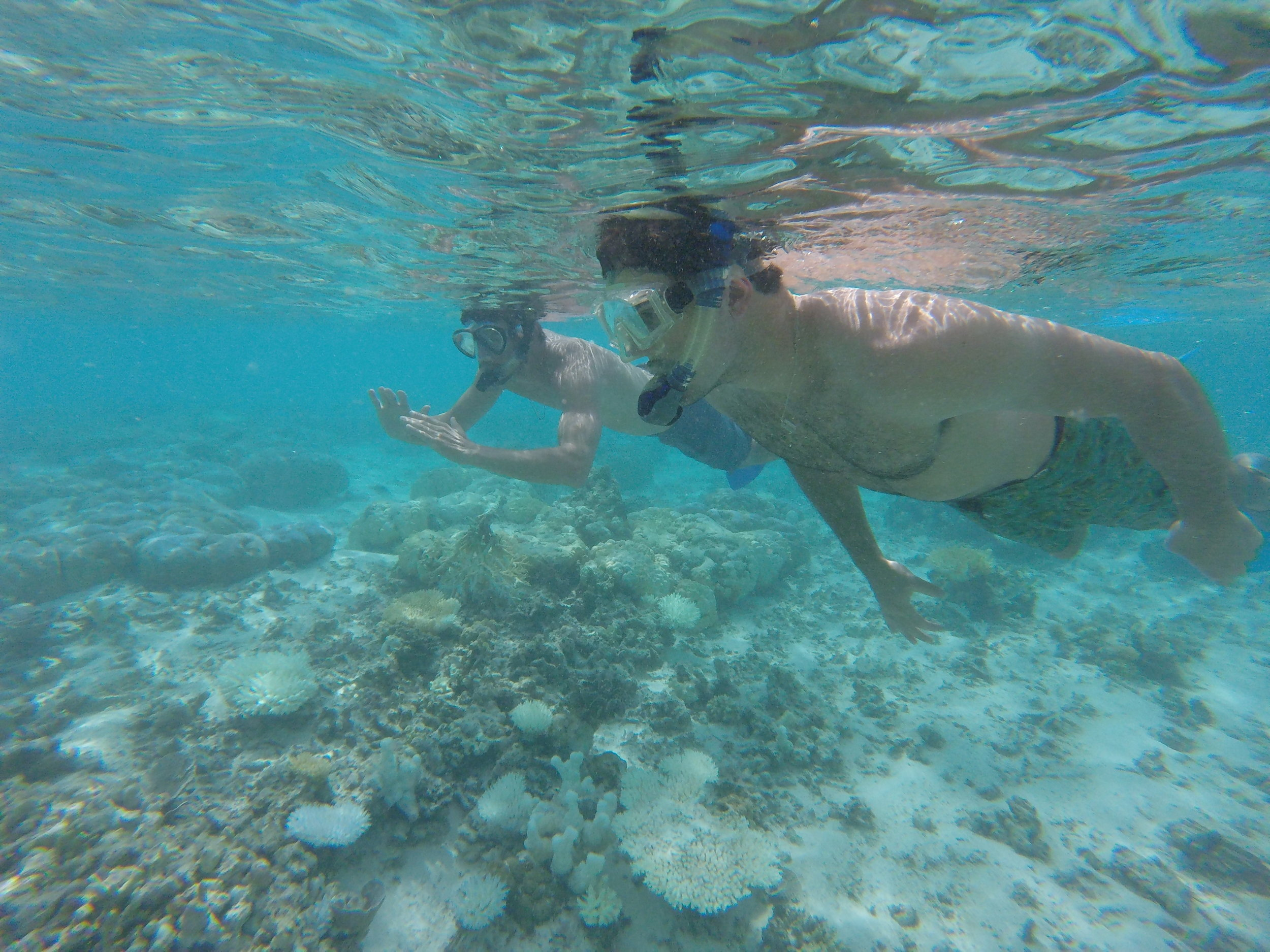 We took a boat to a few snorkeling spots, it's shallow enough to snorkel and not have to worry about paying for a full SCUBA dive