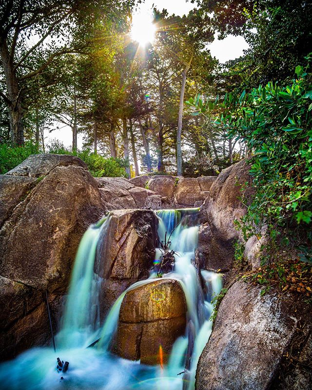 Sunday off in San Fran this week took me to the spectacular Golden Gate Park. There are so many beautiful spots to find and the scale is much bigger than I'd anticipated. Came across this small waterfall on Strawberry Hill and managed to snap a few long exposure shots and have some fun editing 📷 🤓 • • • #sanfrancisco #sanfran #goldengatepark #goldengateparksf #usa #sonya6000 #samyang12mmf2 #waterfall #waterfalls #westcoast #longexposure #longexposureshots #lightroomedit #forest #woods #strawberryhill #beautiful #nature #naturephotography #outdoors #park @sanfrancisco_now @sanfrancisco_photos @sanfranciscoworld @longexposure_shots #long_exposure #travel