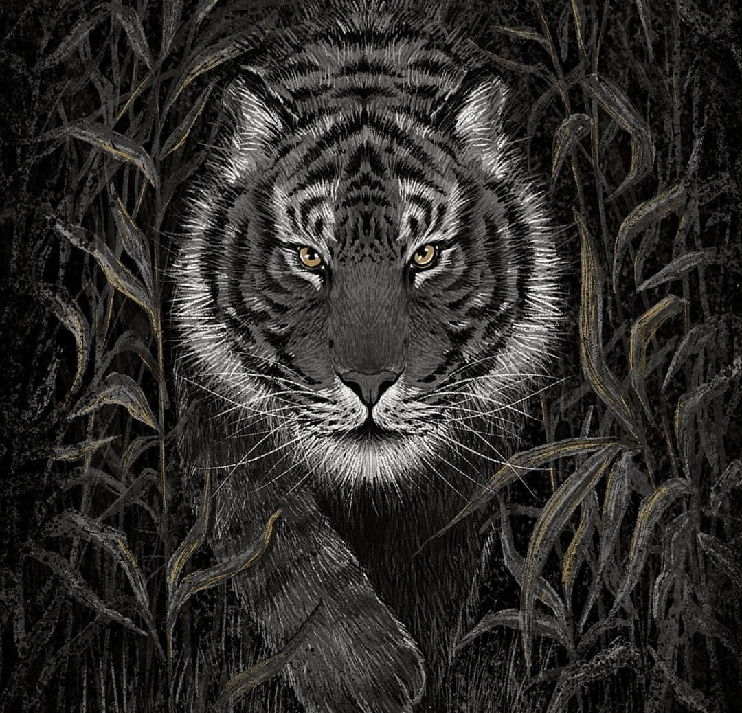 Animalia Indica Cover Art by Rohan Dahotre