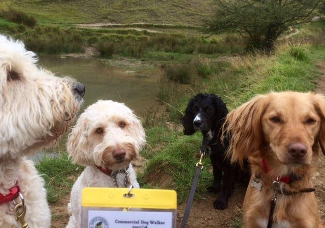 24176719_dogs & licence.jpg