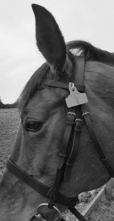 horse_tag_bw_web.jpg