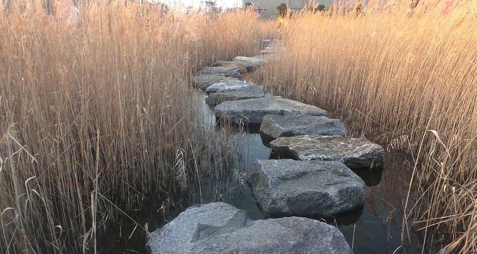 Source:https://pixabay.com/en/reed-stepping-stone-ishibashi-1666746/