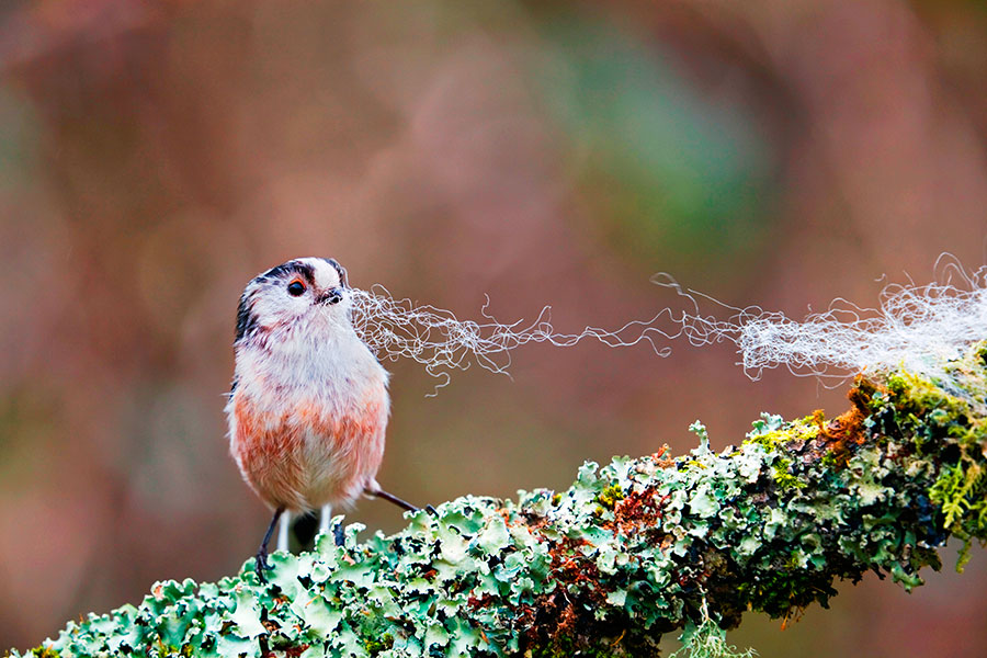Pic: David Chapman/Alamy
