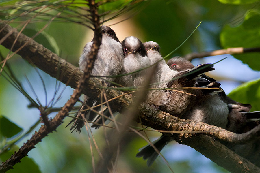 Pic: Lisa Geoghegan/Alamy