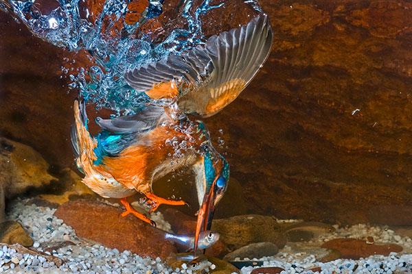 Pic: Naturfoto-Online/Alamy