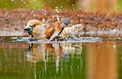 Pic: Nature in Stock/Alamy