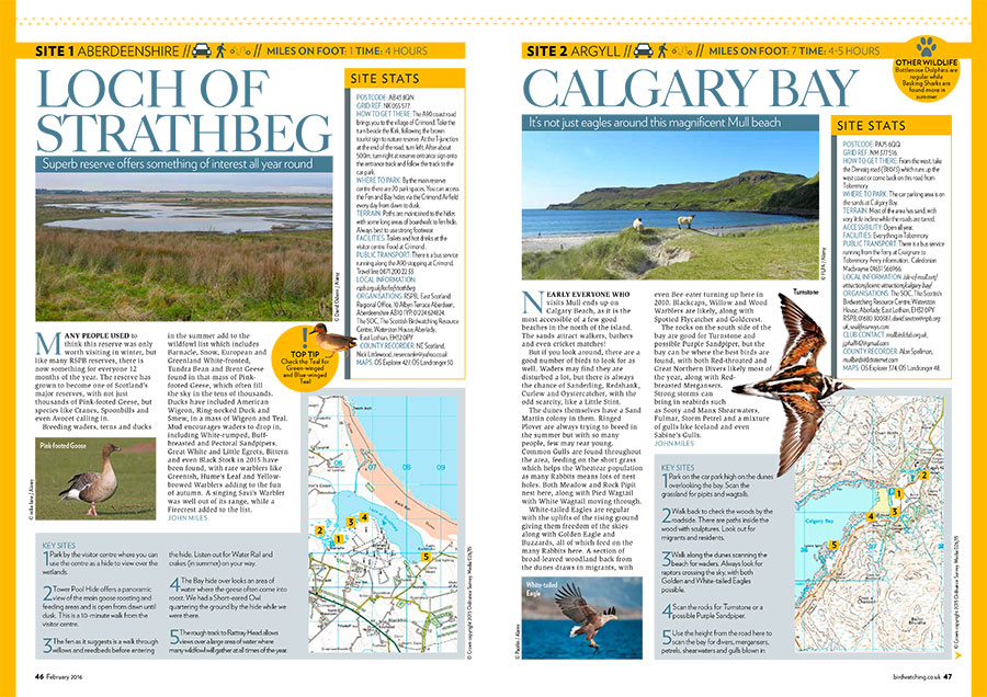 Go-Birding---Part-1-(Low-res-PDF)-1.jpg