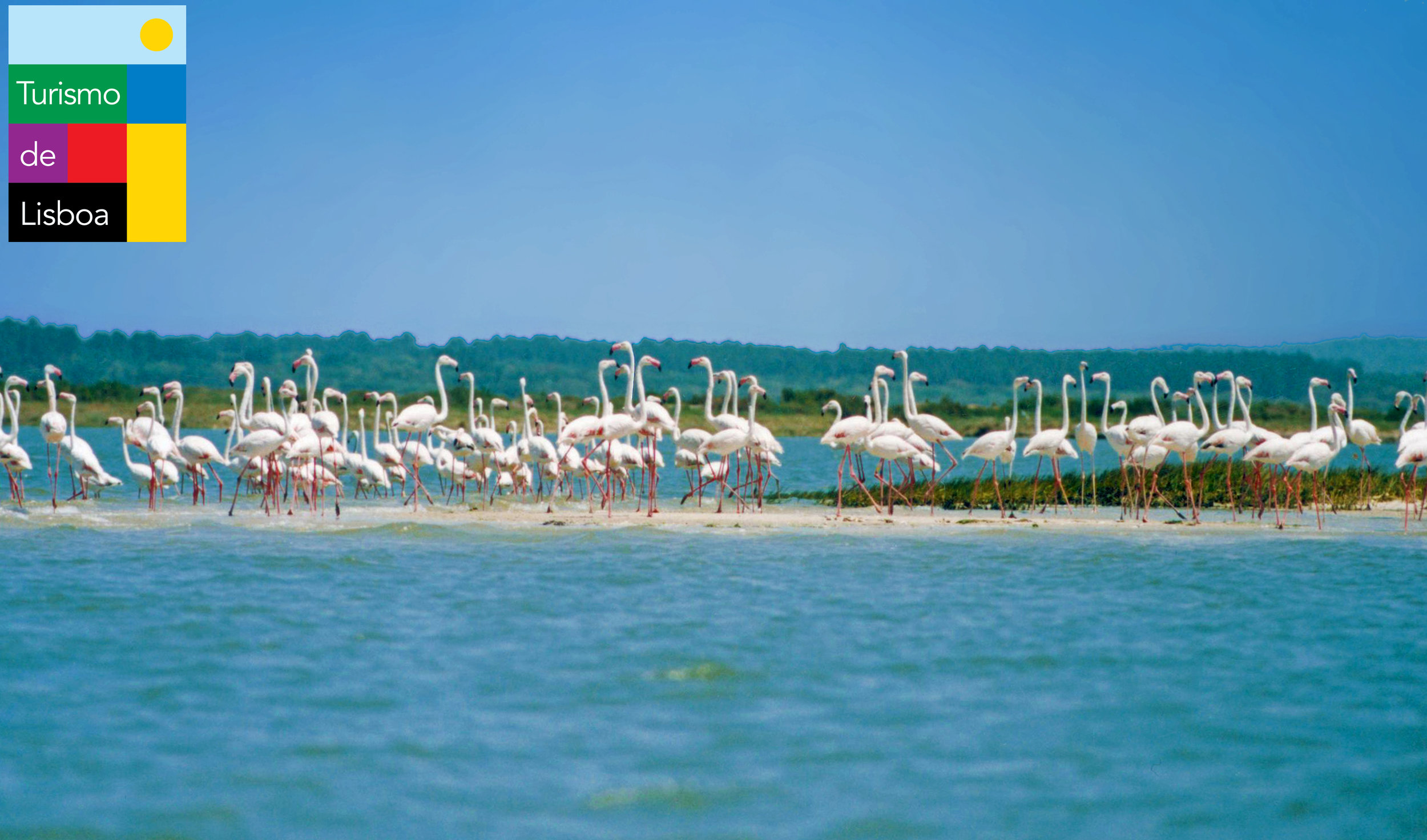 logo252-reserva-natural-do-estuario-do-sado-ns-(1).jpg
