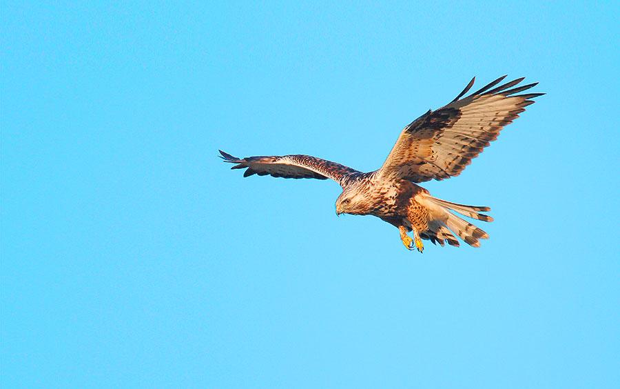 Pic: Buiten-Beeld/Alamy