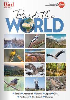 Birding supp 18 v2.JPG