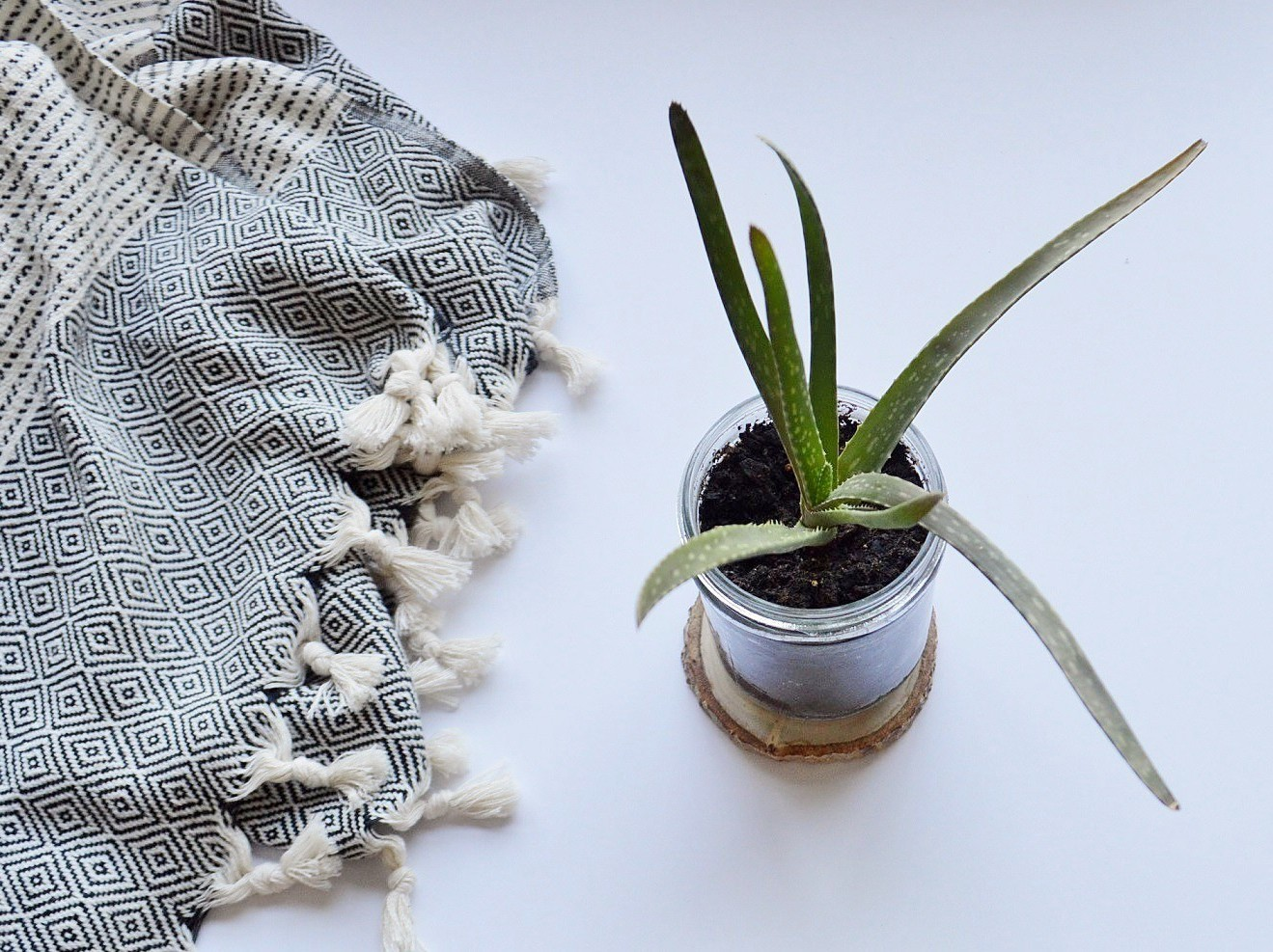 5 Ways to Use Aloe Vera in Your Green Beauty Routine