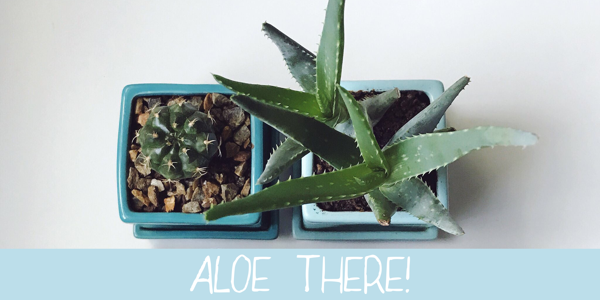 Aloe: The Self Care Community That's Giving You the Tools to Grow