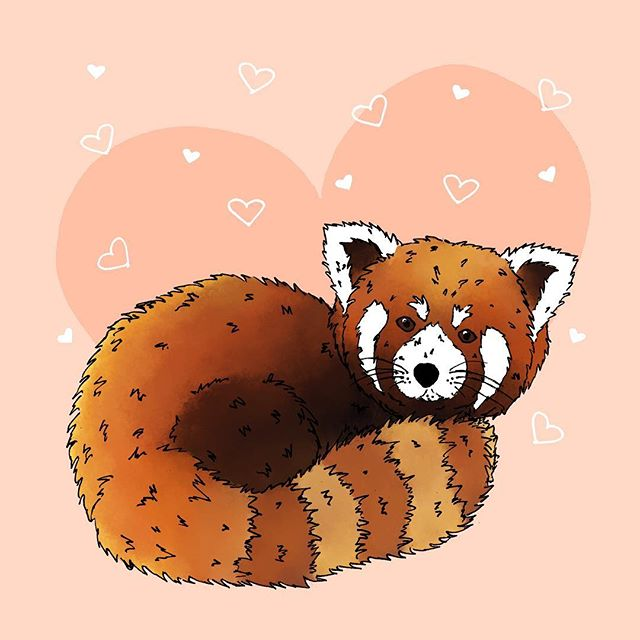 Happy Valentines Day! ❤️ #valentinesday #happyvalentinesday #bemine #redpanda #illustration #illustrator #draw #graphicdesign #graphicdesigner  #penandink #digitaldrawing #digitalpaint #create #instagood #make #art #love