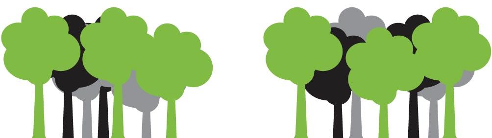 taeh-trees.jpg
