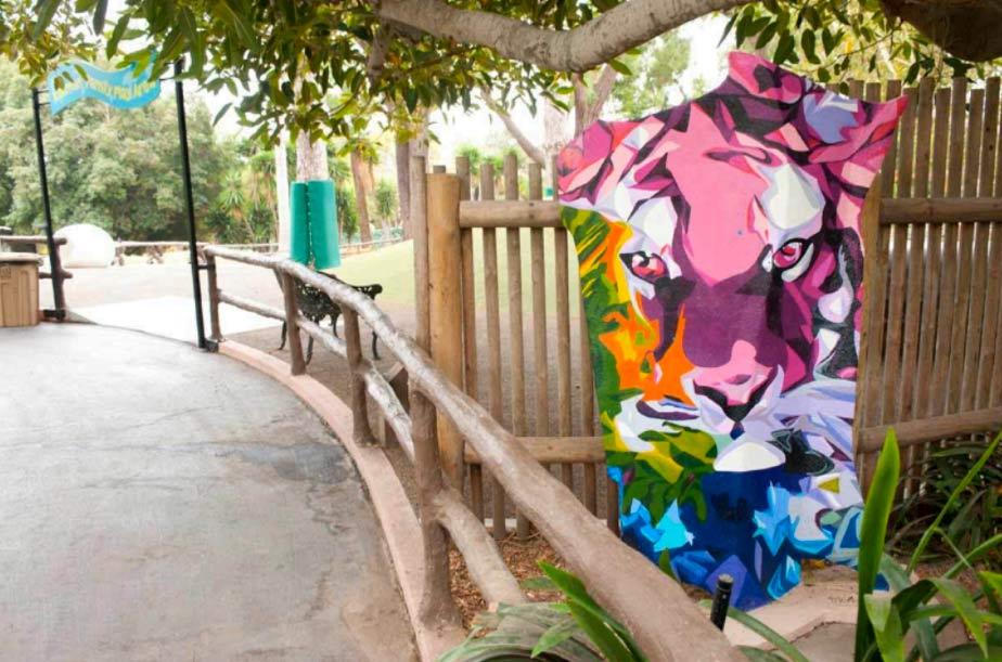 Pink Tiger Santa Barbara Zoo