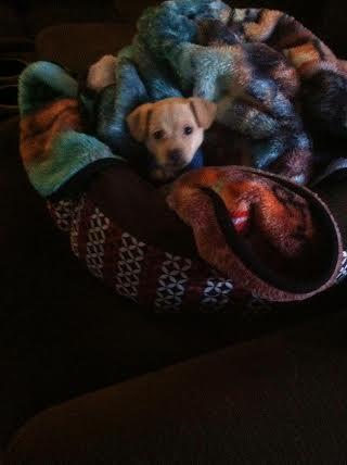 Ms. Addy (skylar) at 6 weeks.