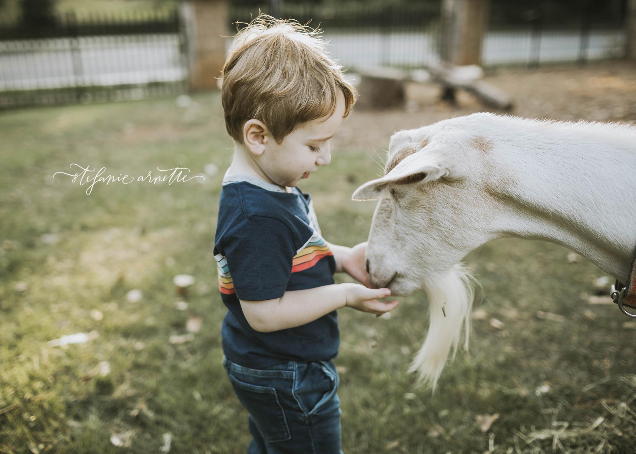 goats_28.jpg