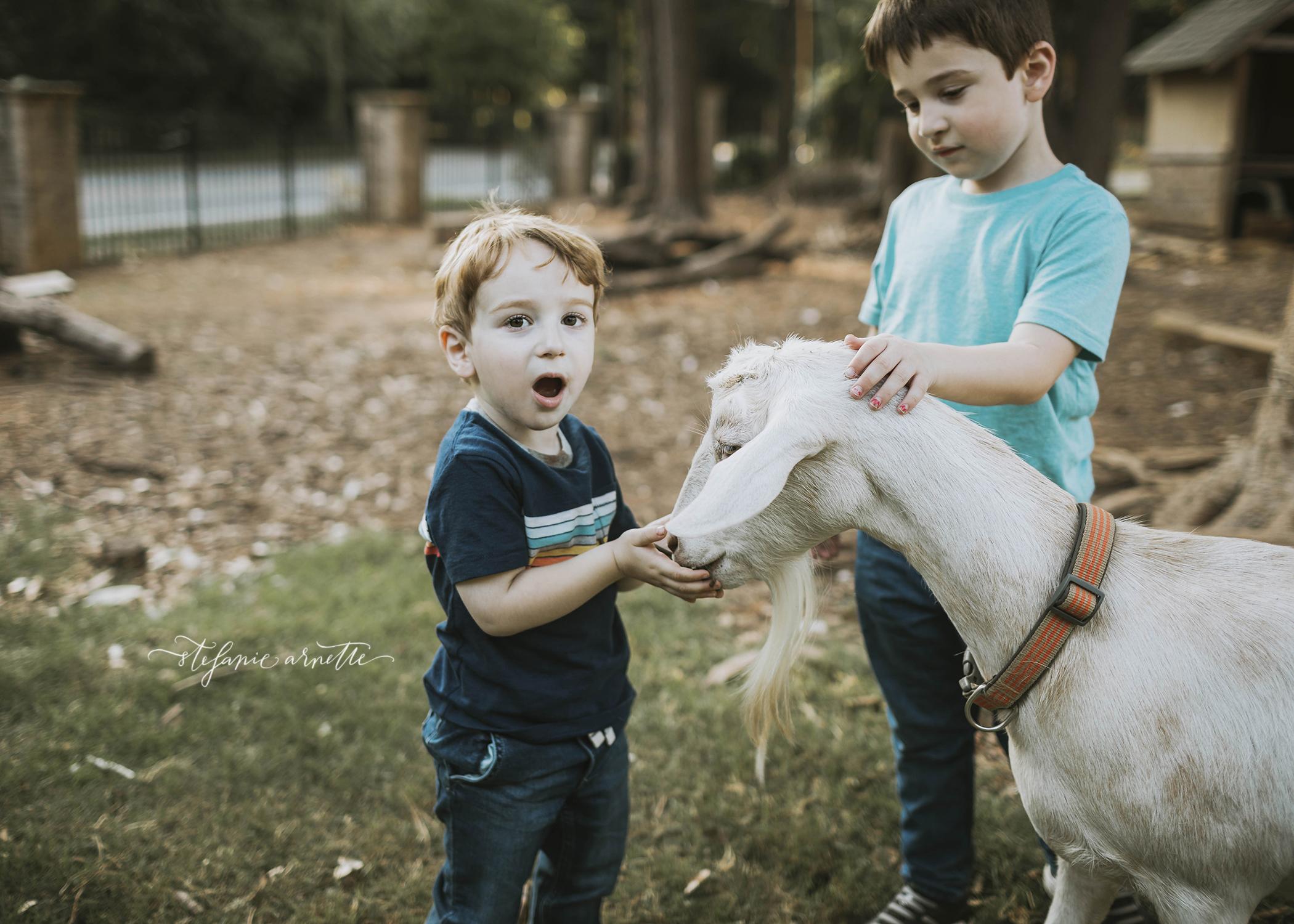 goats_43.jpg