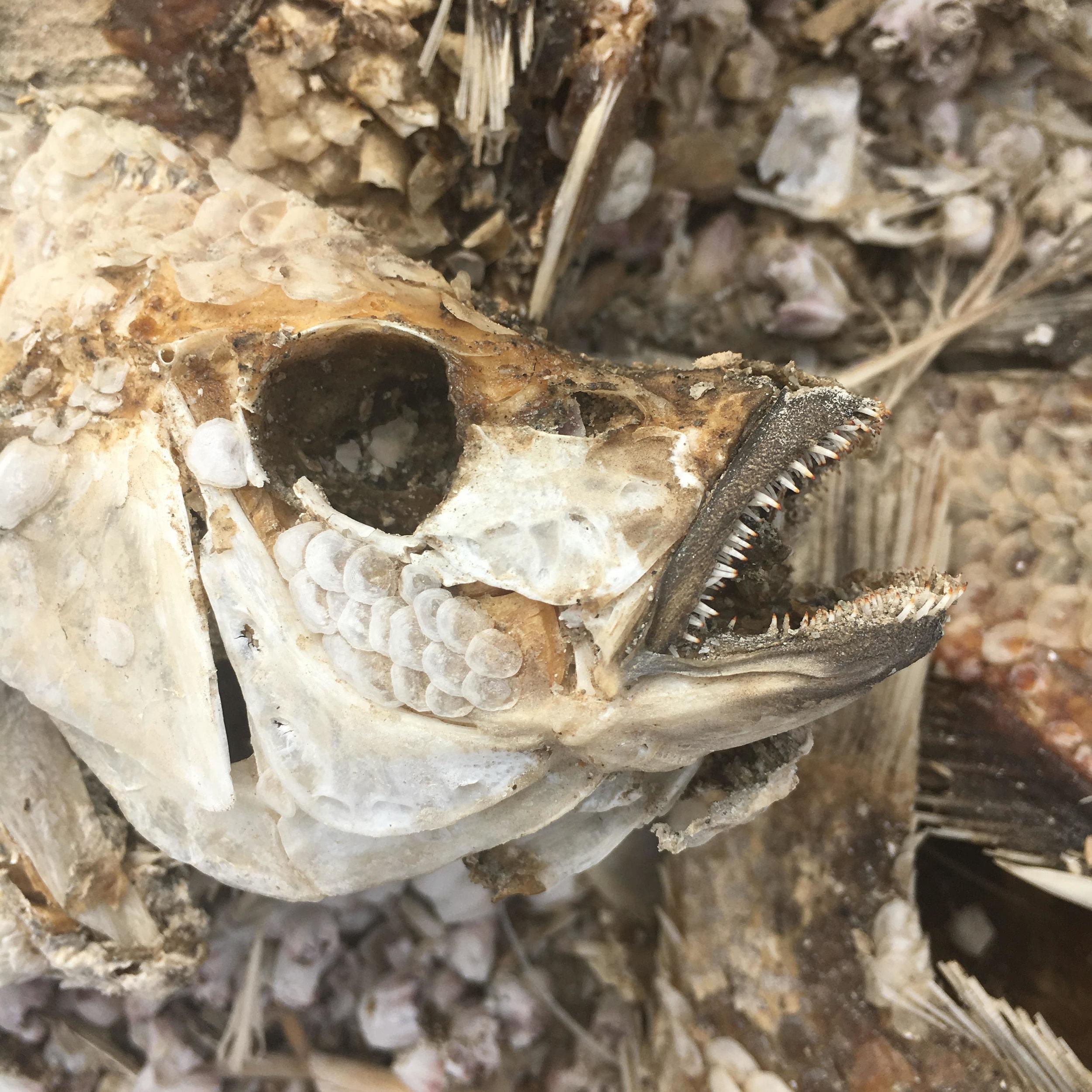 bones 2.jpeg