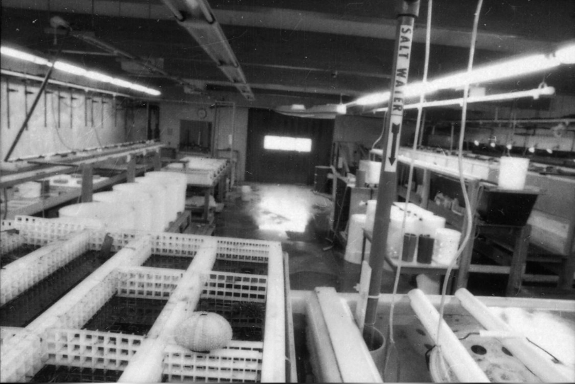The original wet lab in the early days. Photo: HSU
