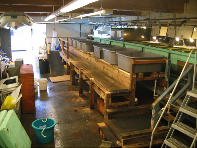 The wet lab as it appeared just before the 2010 renovation. At that time the lab was over 40 years old and constant exposure to seawater had taken its toll.