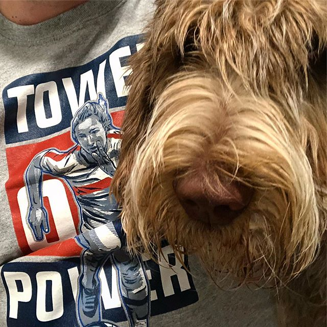 Monday nights with @paolothespinone . . . @sammymewyy #towerofpower #spinone #spinoneitaliano #spinonepuppy #spinonesofinstagram #italianspinone #italianspinonesofinstagram #uswnt