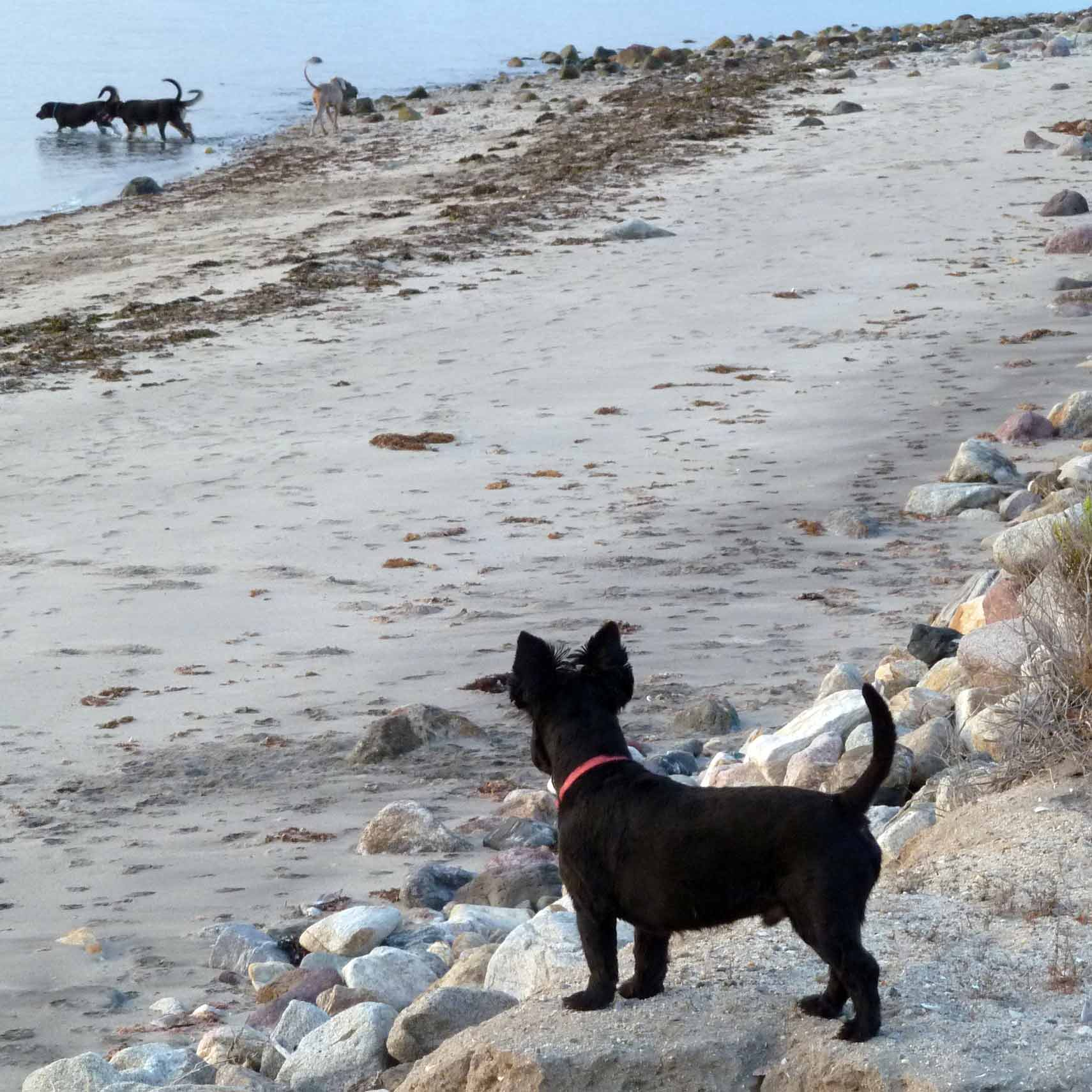 DOGS_1_P1030221.jpg