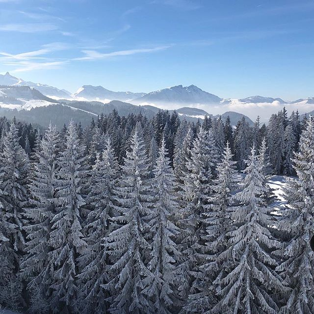 Snowy trees 😍 _ #treeline #snow #ilovemountains  #goodforthesoul