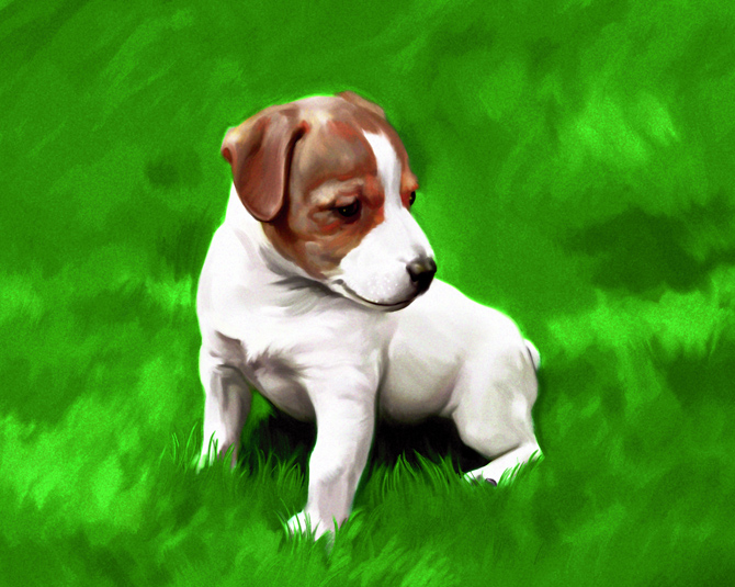 dog2_big.jpg