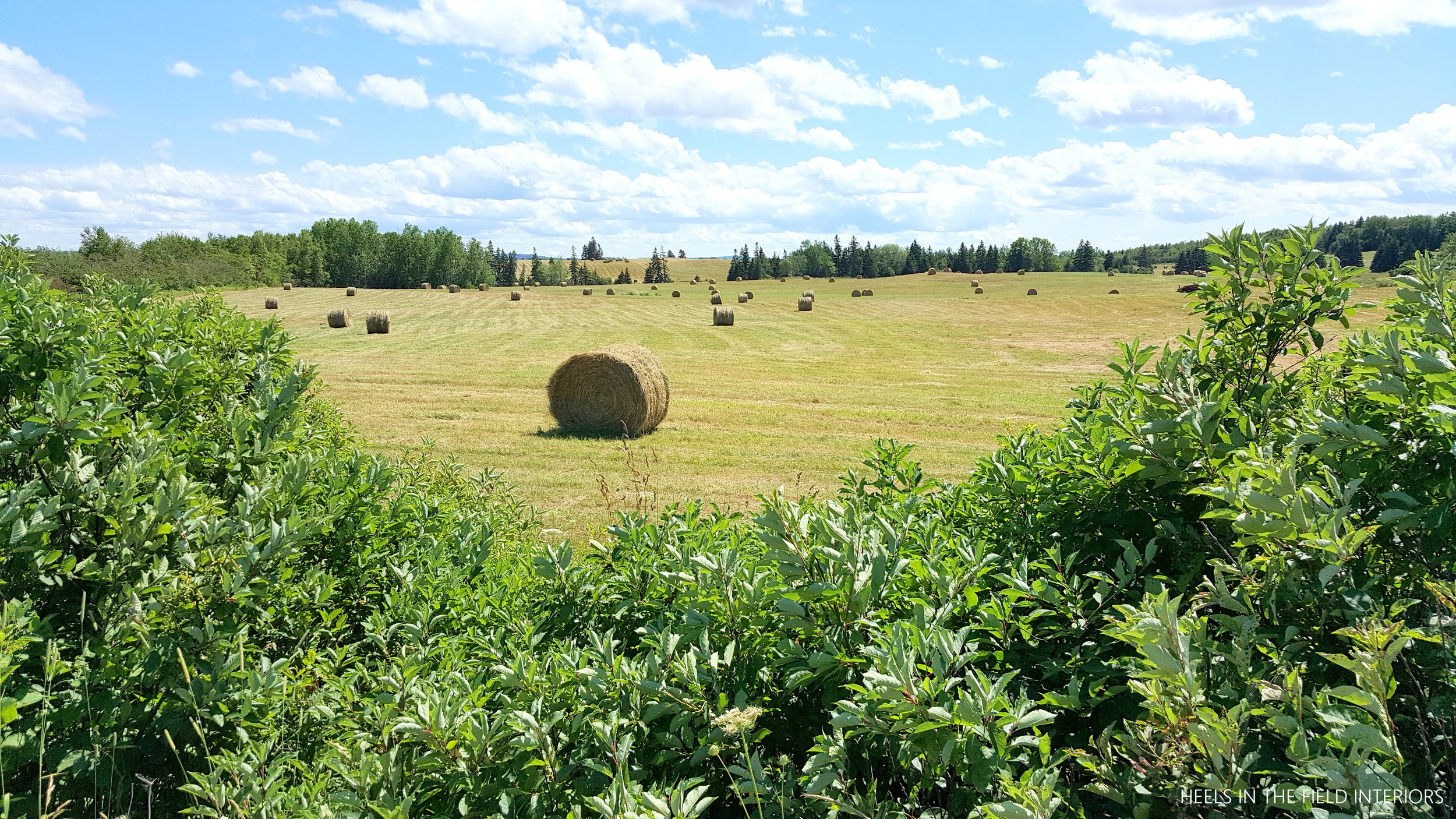 A lovely field of bales in beautiful Nova Scotia.