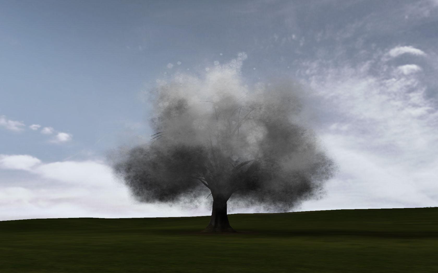 gerrard_smoketree.jpg