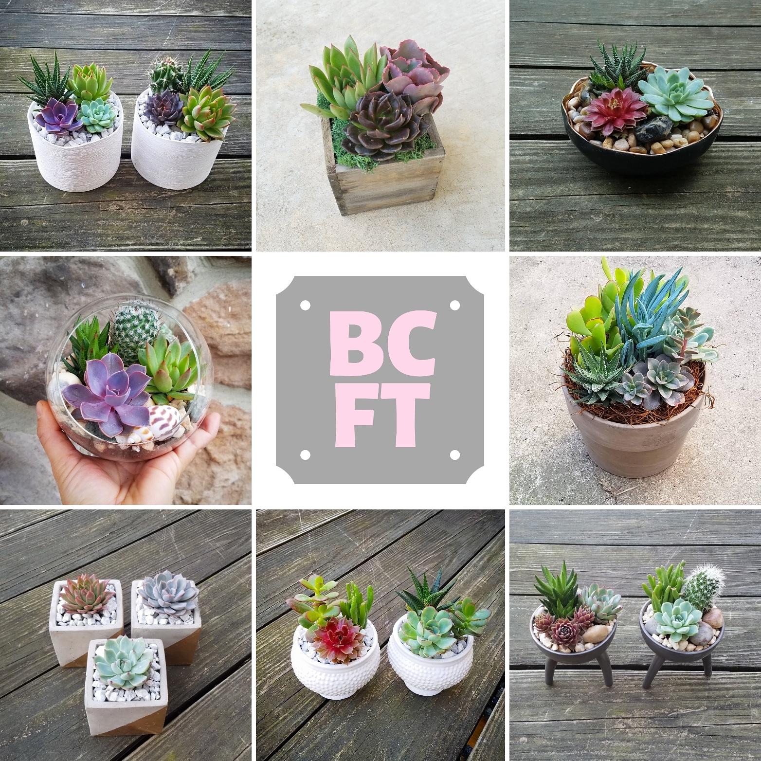 BCFT.jpg