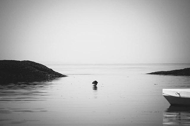 Alone at the sea part 6  #photography #photo #photooftheday #instapic #instagood #picoftheday #landscapephotography #landscape #beautifulbrithishcolumbia #sea #seaside #ocean #oceanview #nature #explorebc #destinationbc #canada #westcoast #pic #waves #pacificocean #hellobc #beach #happy #summer