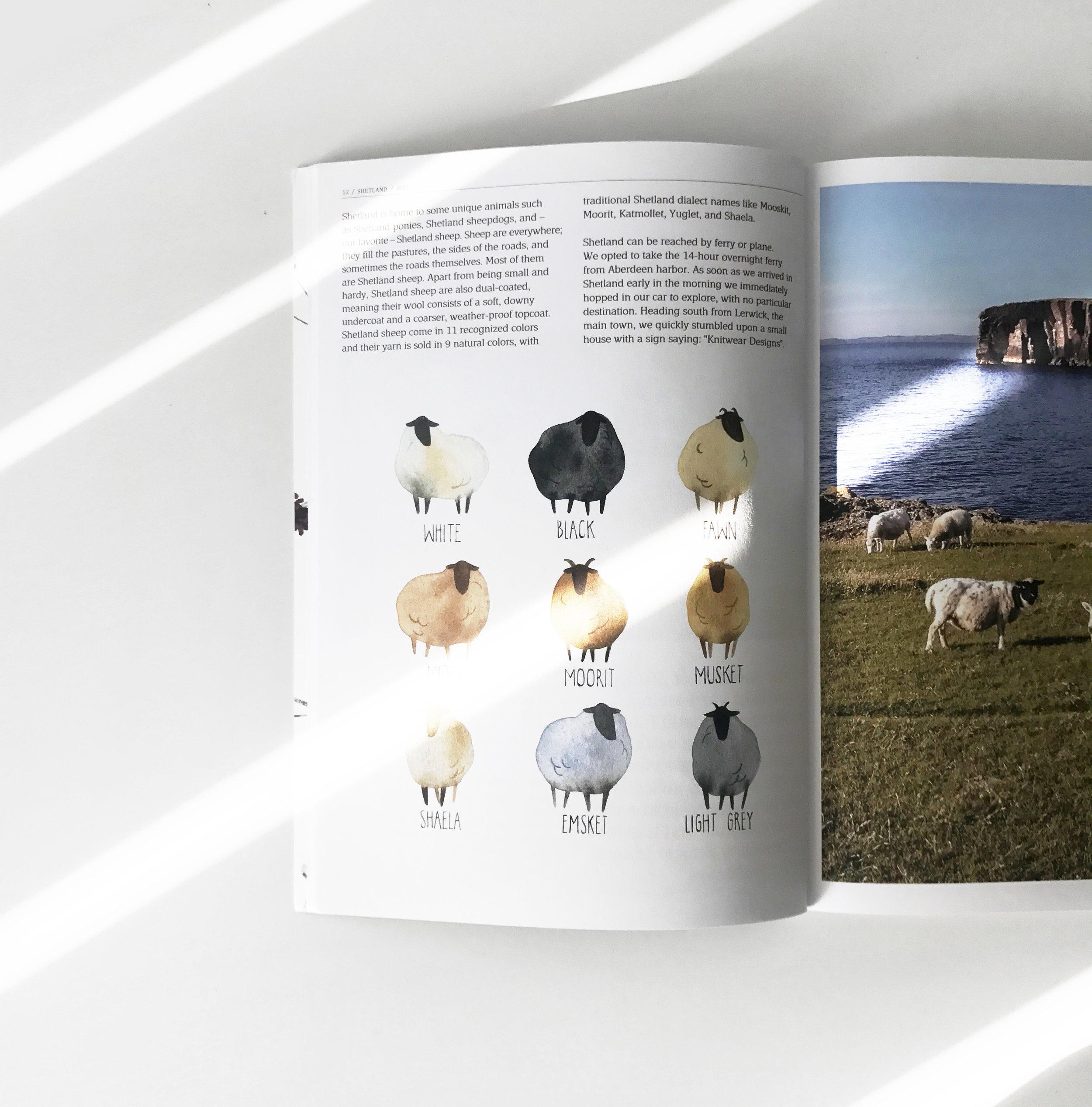 sheep_spread