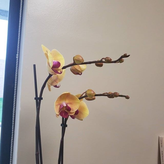 The new additions to my office. #orchids #airplants #kathrynperryorchids