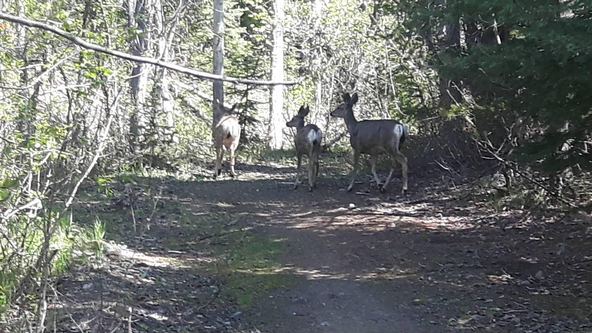 deer-in-camp-2