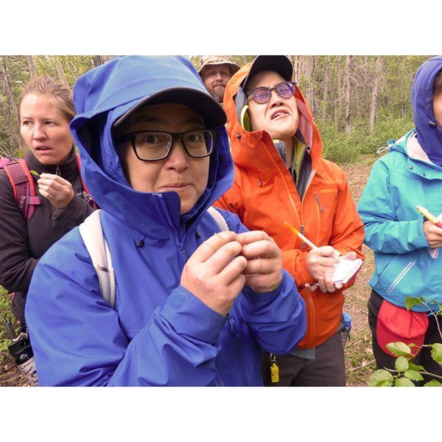 Our students making alder catkins look delicious!... 😅 . . . #wildedible #survivalbushcraft #wildernesssurvival #bushcraftcourse #survivaltraining #livingofftheland #bitter