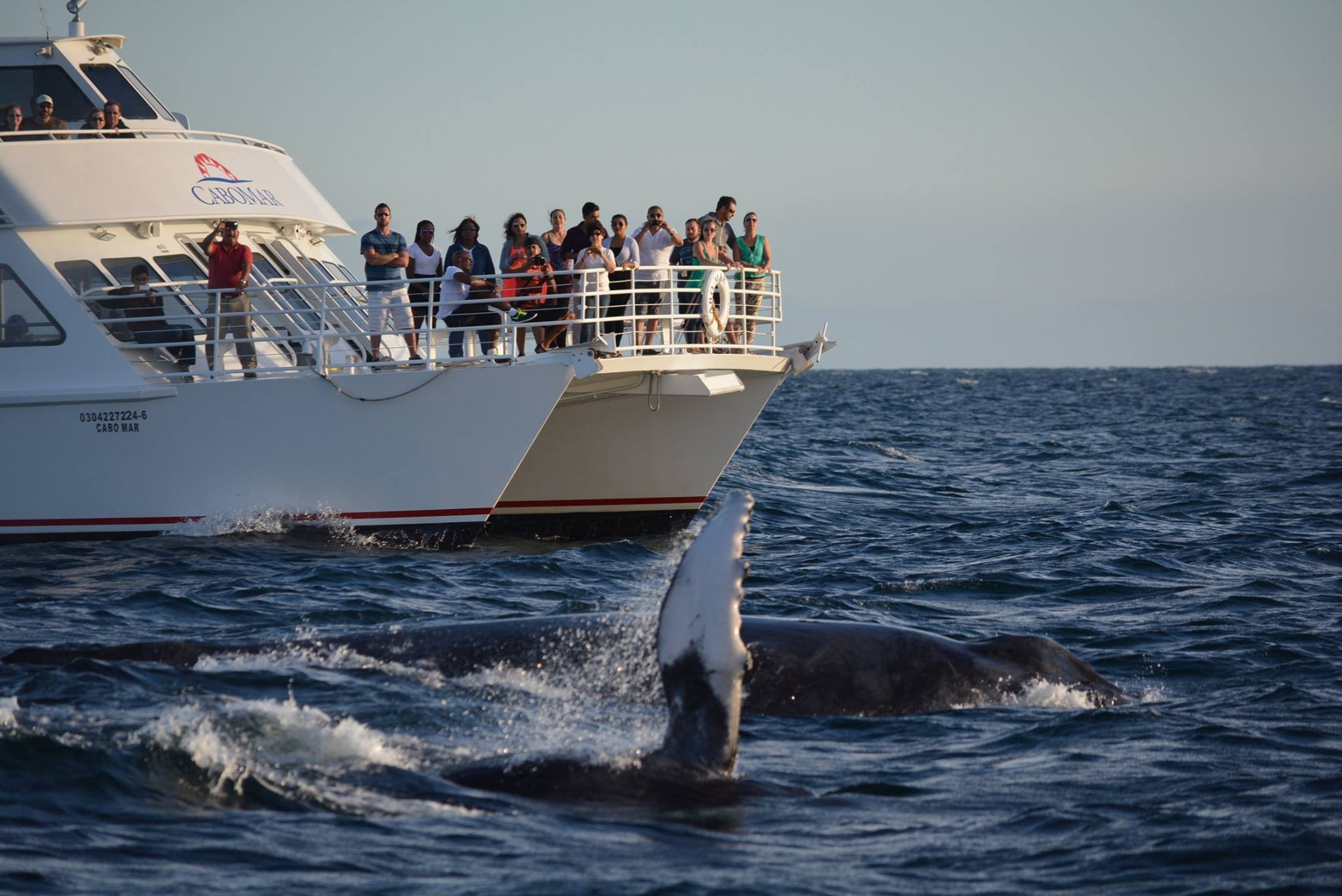 Cabo Mar Dinner Cruise